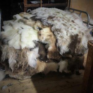 Sheepland Sheepskin Blog 32